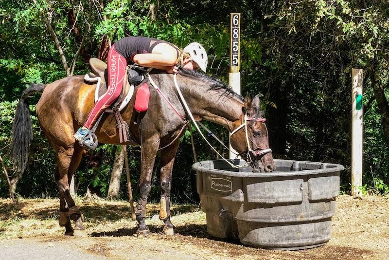 Choosing-Endurance-Horse.jpg