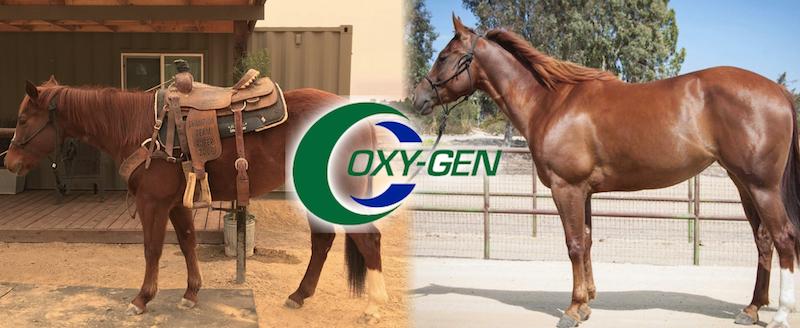 oxygen 2.jpg